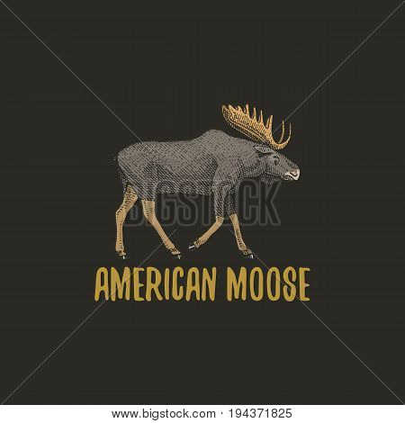 american moose or eurasian elk engraved hand drawn in old sketch style, vintage animals. logo or emblems, retro label and badge