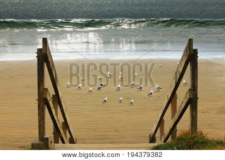 Image of a seagulls on the sand at a beach
