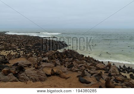 Colony of cape fur seals from Cape Point Namibia