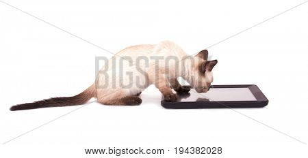 Side view of a Siamese kitten with his paws on a tablet computer, on white background