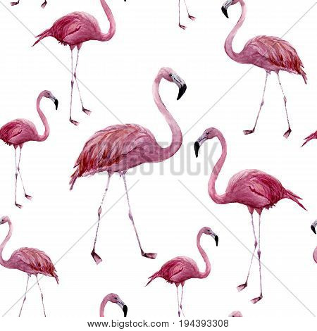Watercolor flamingo seamless pattern. Exotic wading bird ornament isolated on white background. Tropical natural illustration. For design, prints or background.