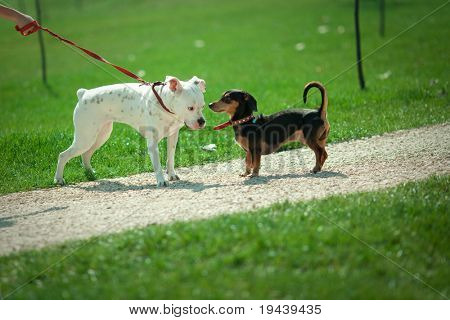 two dogs in a park, narrow depth of field