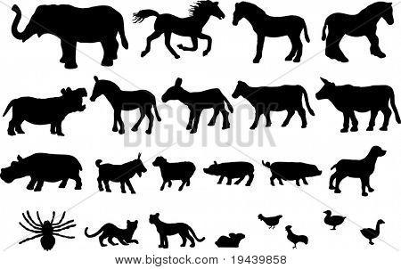 Wild and farm animals high detail vector