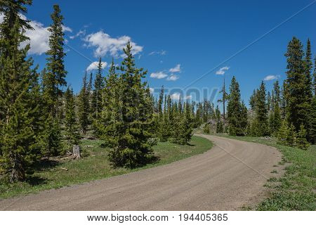 Wyoming Forest Road