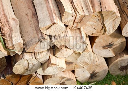deforested cut tree wood in country farm