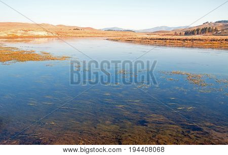 Aquatic grass and vegetation in the Yellowstone river in the Hayden valley in Yellowstone National Park in Wyoming USA