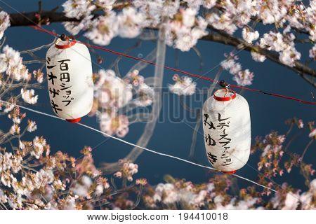 Lanterns in Sakura Festival at walkway Ooyokogawa river , Tokyo, Japan. Text mean blessing in sakura festival
