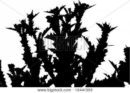 plant full of thorns