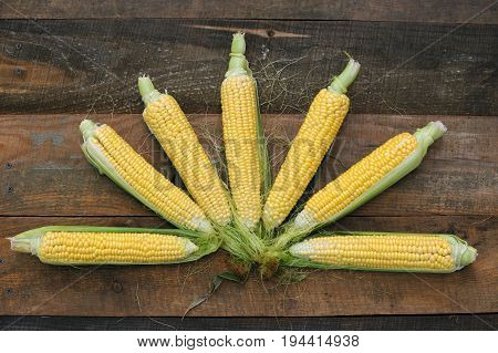 Young corn dairy ripeness food varieties grown on an ecological farm away from the city roads factory emissions