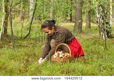 Mushrooming woman picking mushrooms in the forest