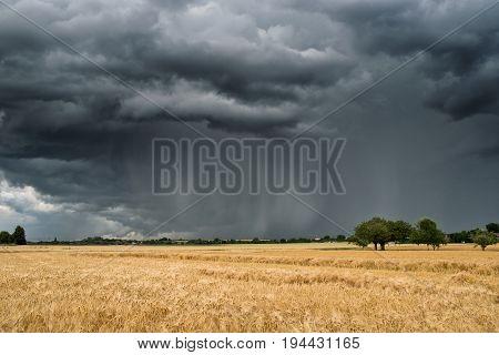 Summer thunderstorm over a wheat field Wetterau Hesse Germany