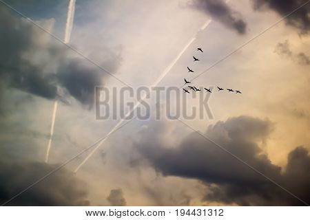 A wedge of cranes, inversion of the plane against the sky