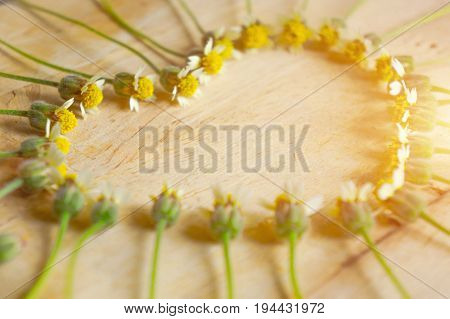 Ring of flowers arranged in heart shape with soft golden light representing the concept of love and care.