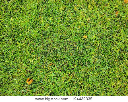 Grass. Green. Grass Background. Natural green grass texture Natural green grass background for design with copy space for text or image.