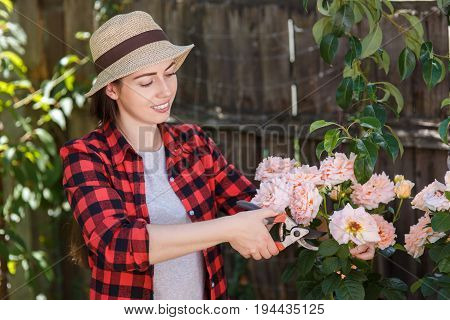 gardener girl trimming flowers with secateurs in the garden. Young woman taking care of rose bushes. People, gardening, care of flowers, hobby concept