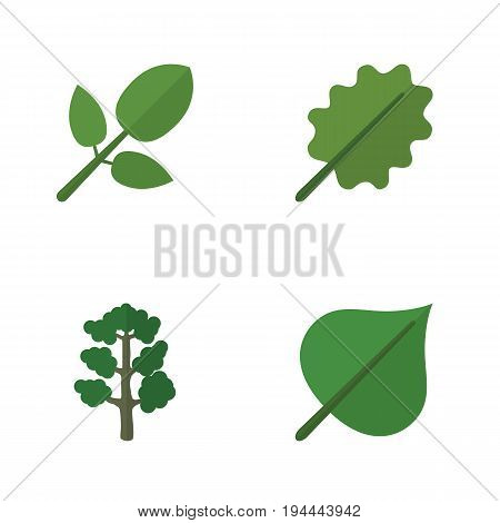 Flat Icon Natural Set Of Alder, Foliage, Hickory And Other Vector Objects. Also Includes Foliage, Alder, Oak Elements.