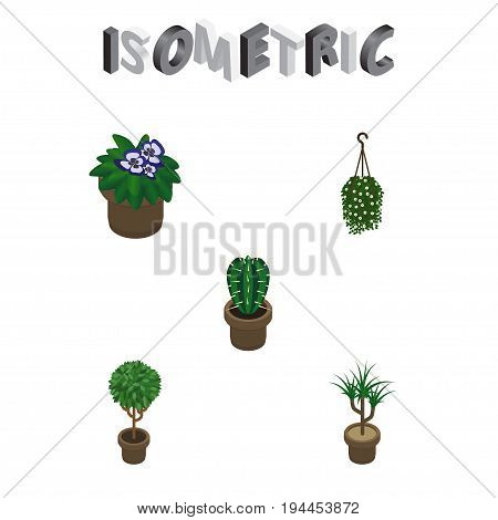 Isometric Houseplant Set Of Blossom, Tree, Flowerpot And Other Vector Objects. Also Includes Flowerpot, Plant, Botany Elements.