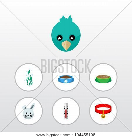 Flat Icon Pets Set Of Bunny, Kitty Collar, Rabbit Meal And Other Vector Objects. Also Includes Collar, Temperature, Hare Elements.