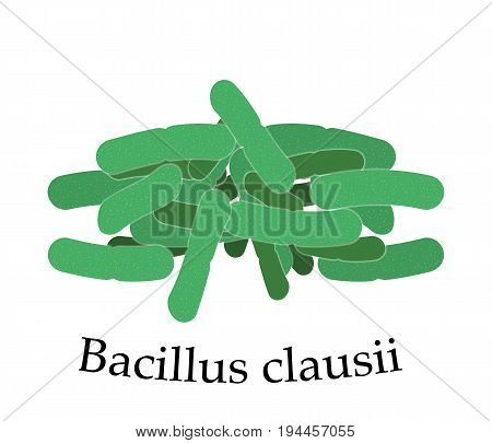 Bacillus clausii vector illustration. Good bacteria microorganism isolated on white background. Probiotics vector concept. Probiotic family bacteria.