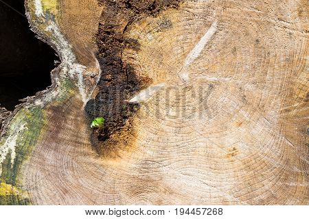 A slice of the old cut tree. Image is an abstract illustration or painting fine art.