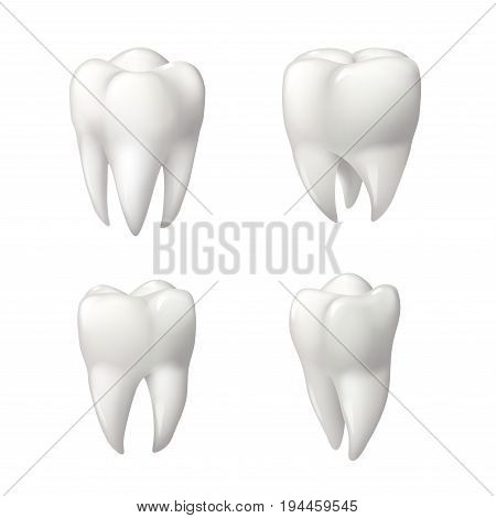Tooth isolated icon set. Healthy teeth 3d illustration with white enamel and root. Dentistry, dental health care, dentist office, oral hygiene themes design