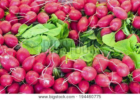 Fresh radish for sale at a market