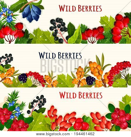 Wild berry cartoon banner set. Forest blackberry, cranberry, cowberry, barberry, rowanberry, briar, honeysuckle, bird cherry and sea buckthorn fruit and green leaves border for food and drink design
