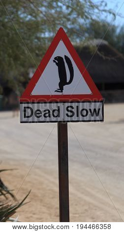 Sign reading dead slow with a drawing of African ground squirrel in Namib Desert in Namibia.