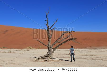 Lonely man at Deadvlei, Sossusvlei. Concept of wanderlust in namibian famous desert. Adventure trip travel to african wonders in Namibia