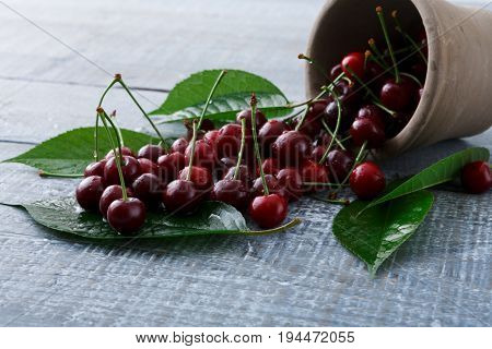 Cherries closeup with green leaves pour out of a bowl on blue rustic wood. Scattered fruit backround. Healthy food at table