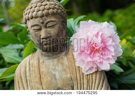 Tight Shot of Small Meditating Buddha Statue with Pink Peony Flower Resting On Its Shoulder