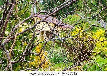 Autumn Garden Dried Tree Branches