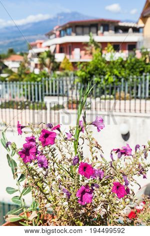 Decorative Flowerbed In Giardini Naxos Town