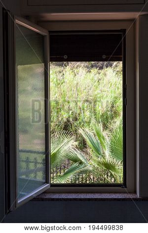 View Of Green Backyard From Open Home Window