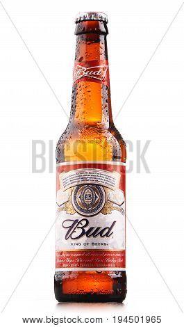 Bottle Of Budweiser Beer Isolated On White