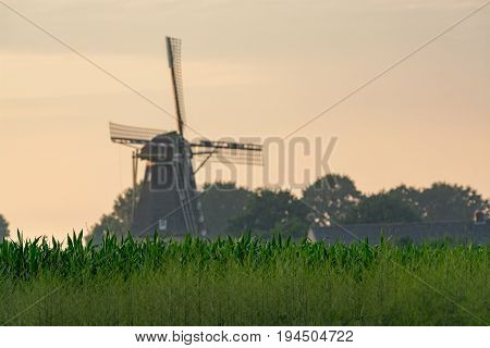 Dutch windmill small village in North Brabant mill and corn fields on sunset in summer