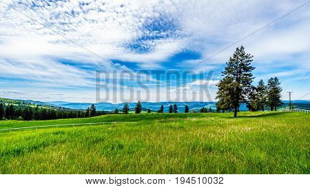 Grasslands along the Sun Peaks Road in the Shuswap Highlands in central British Columbia, Canada