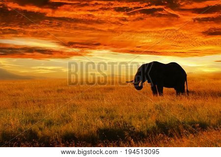 Lonely Elephant against sunset in savannah. Serengeti National Park. Africa. Tanzania.