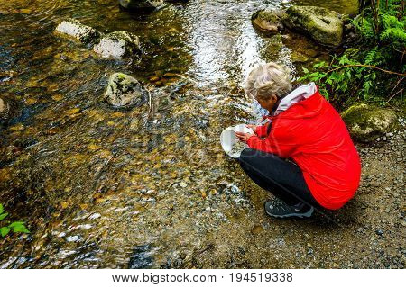 Woman releasing Chum fry into Kanaka Creek at the fish hatchery in Kanaka Creek Regional Park near the town of Maple Ridge in British Columbia, Canada poster
