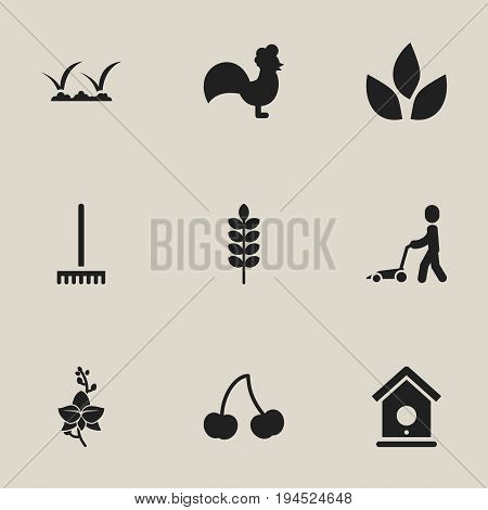 Set Of 9 Editable Planting Icons. Includes Symbols Such As Frond, Rooster, Blossom And More. Can Be Used For Web, Mobile, UI And Infographic Design.