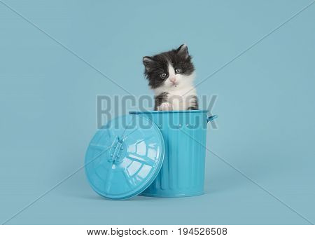 Cute 6 weeks old black and white baby cat in a blue trashcan on a blue background