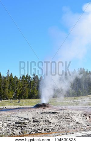 Pink Cone Geyser is a cone-type geyser in the Lower Geyser Basin of Yellowstone National Park. The geyser's sinter cone is a shell-pink caused by the presence of manganese and iron oxides.