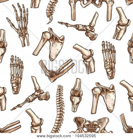 Human skeleton bone seamless pattern background. Medical pattern with bone and joint of hand, knee, hip, foot, spine, elbow, pelvis, shoulder, wrist, arm, finger sketches for anatomy, medicine design