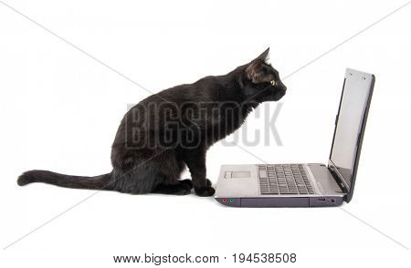 Side view of a curious black cat inspecting a laptop screen, on white background