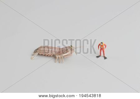 Figure Of Diver With Peacock Mantis Shrimp