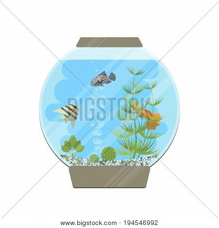 Cartoon vector home glass aquarium illustration with water, plants and fish. Isolated aquarium life clipart in flat style.