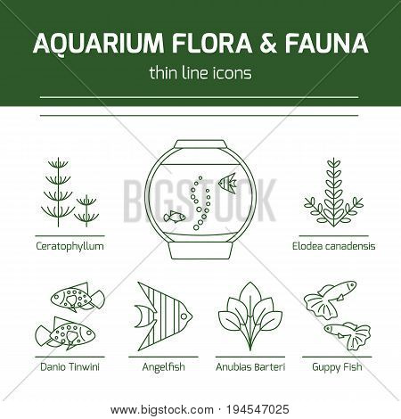 Thin line vector icons - aquarium flora and fauna. Outline isolated signs of fish and plants for fish tank.