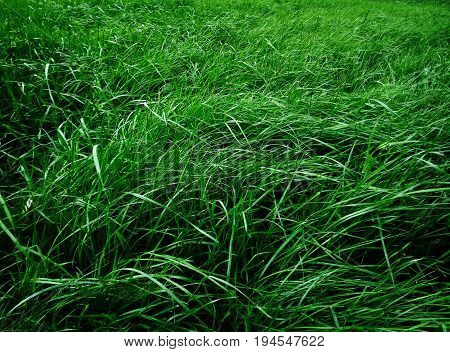 Grass, green grass. Grass background. Green background. Lawn. Green lawn. Nature background. Grass texture. Summer background.