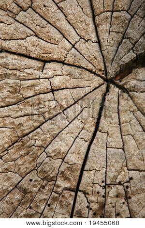 High resolution trunk profile from old, dried Oak