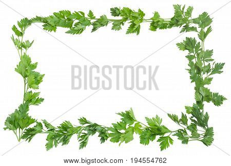 Background of the parsley twigs laid out around the perimeter in the form of a frame with empty central part on a light background